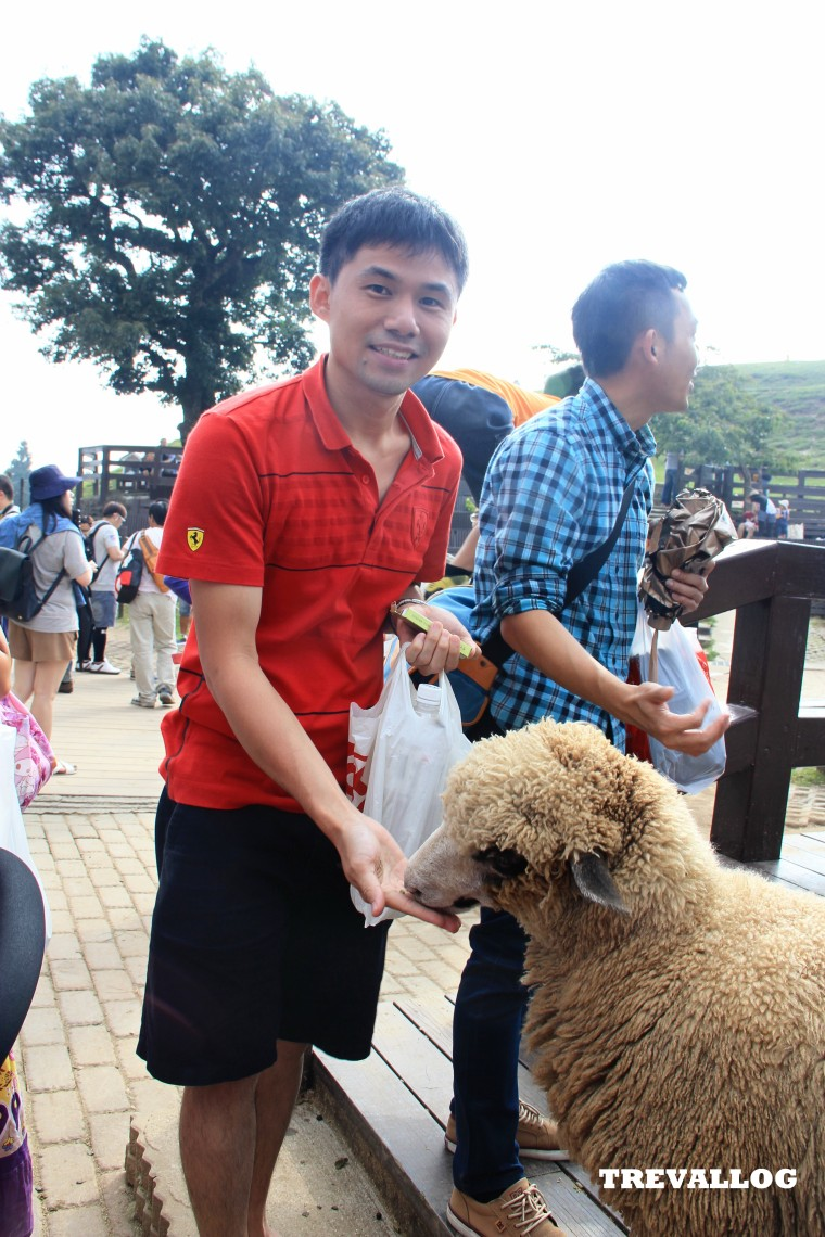 Sheep Show at Cingjing Farm, Taiwan