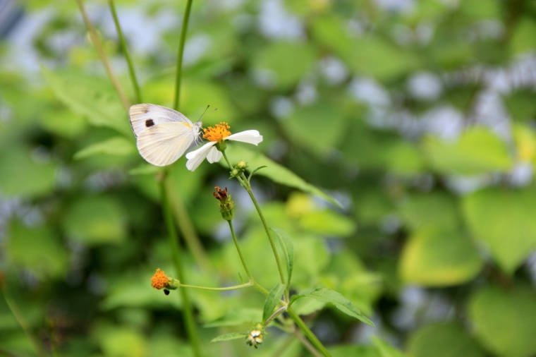 Butterfly at Kadoorie Farm & Botanic Garden, Hong Kong