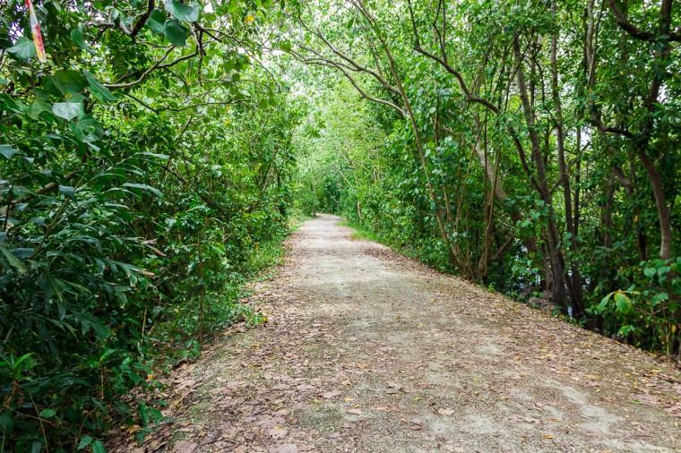 View of Migratory Bird Trail, Sungei Buloh Wetland Reserve, Kranji Countryside, Singapore