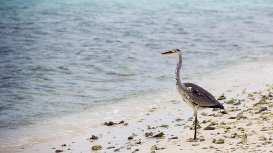 Hangnaameedhoo Local Island in Maldives